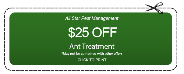 Coupon for Ant treatment
